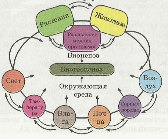 части природного биоценоза